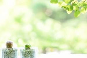 観葉植物と緑